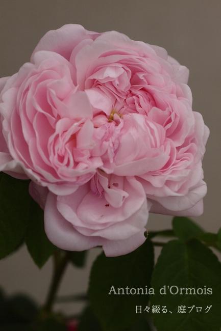 f:id:m-garden-life:20180505185126j:plain