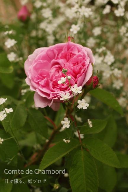 f:id:m-garden-life:20180505185147j:plain