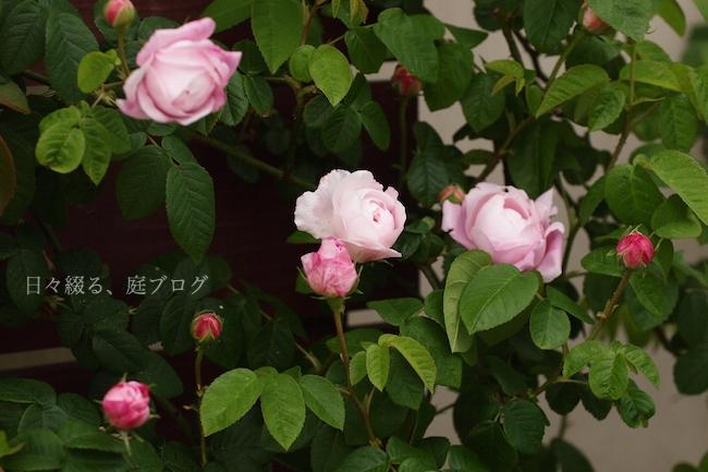 f:id:m-garden-life:20180505192108j:plain