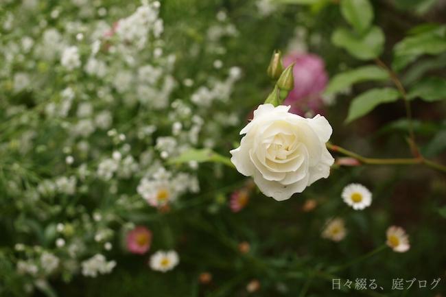 f:id:m-garden-life:20180508144820j:plain