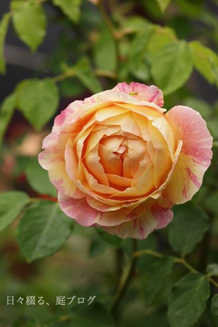 f:id:m-garden-life:20180508145011j:plain
