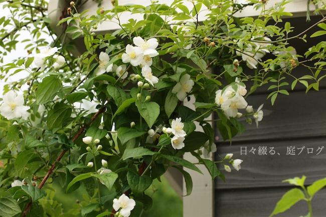 f:id:m-garden-life:20180508160442j:plain