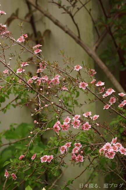 f:id:m-garden-life:20180508161101j:plain
