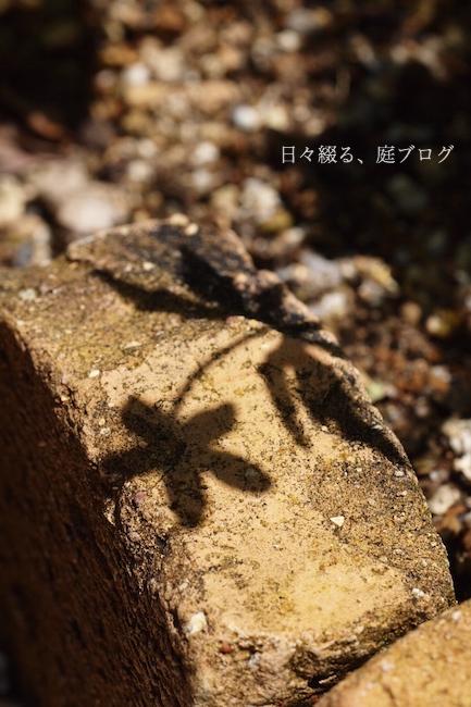 f:id:m-garden-life:20180510140051j:plain
