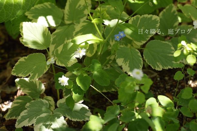 f:id:m-garden-life:20180510141236j:plain