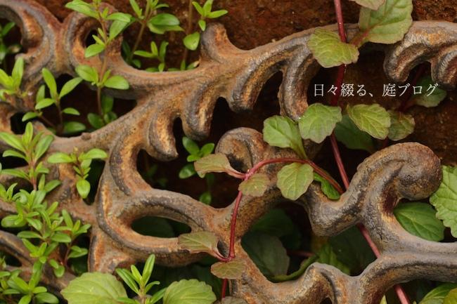 f:id:m-garden-life:20180510141255j:plain