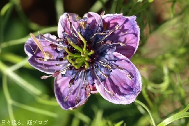 f:id:m-garden-life:20180513155735j:plain