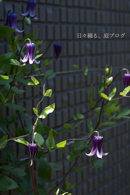 f:id:m-garden-life:20180514194055j:plain