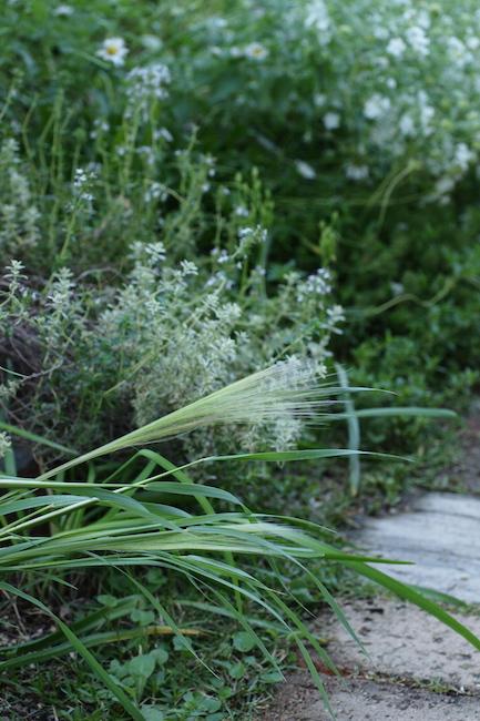 f:id:m-garden-life:20180514195454j:plain