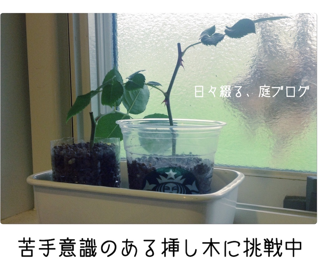 f:id:m-garden-life:20180515210126j:image