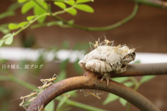f:id:m-garden-life:20180516173936j:plain