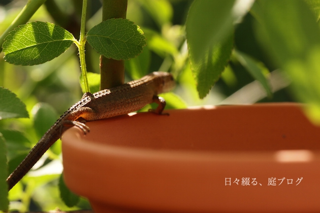 f:id:m-garden-life:20180516175029j:plain