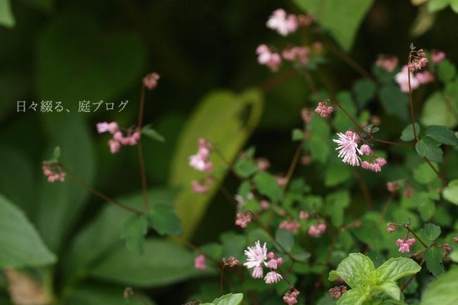 f:id:m-garden-life:20180516175509j:plain