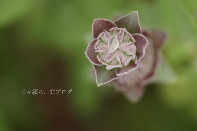 f:id:m-garden-life:20180516205321j:plain