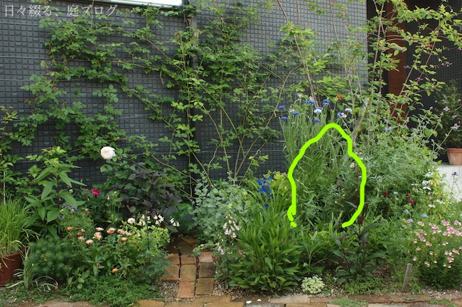 f:id:m-garden-life:20180517182222j:plain