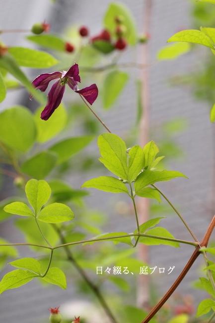 f:id:m-garden-life:20180517194141j:plain