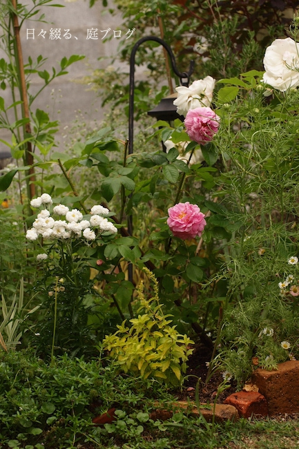 f:id:m-garden-life:20180518142519j:plain