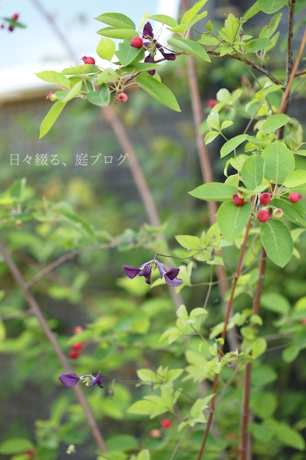 f:id:m-garden-life:20180521171124j:plain