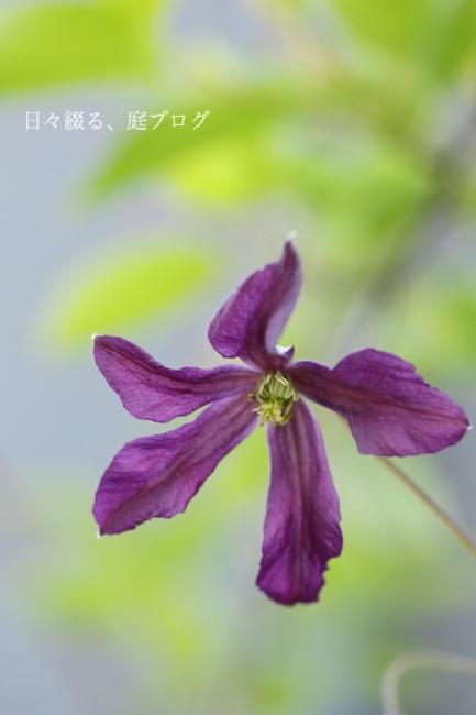 f:id:m-garden-life:20180521171236j:plain