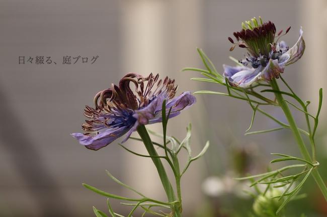 f:id:m-garden-life:20180522162923j:plain
