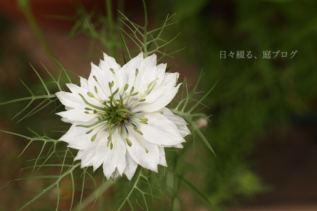 f:id:m-garden-life:20180522163332j:plain