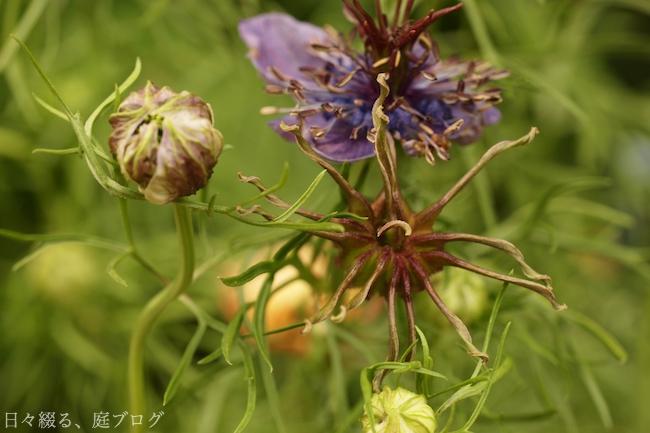 f:id:m-garden-life:20180522164435j:plain