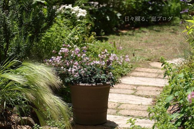 f:id:m-garden-life:20180524173810j:plain