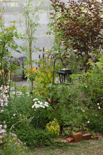 f:id:m-garden-life:20180524204940j:plain