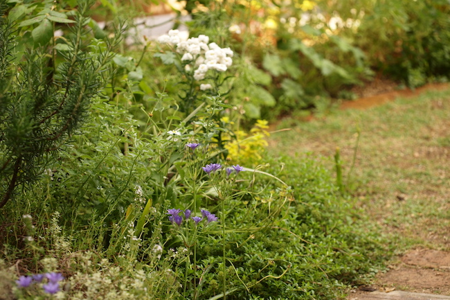f:id:m-garden-life:20180525161823j:plain