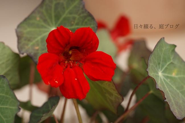 f:id:m-garden-life:20180526180016j:plain