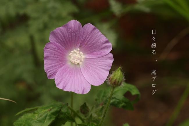 f:id:m-garden-life:20180530174838j:plain
