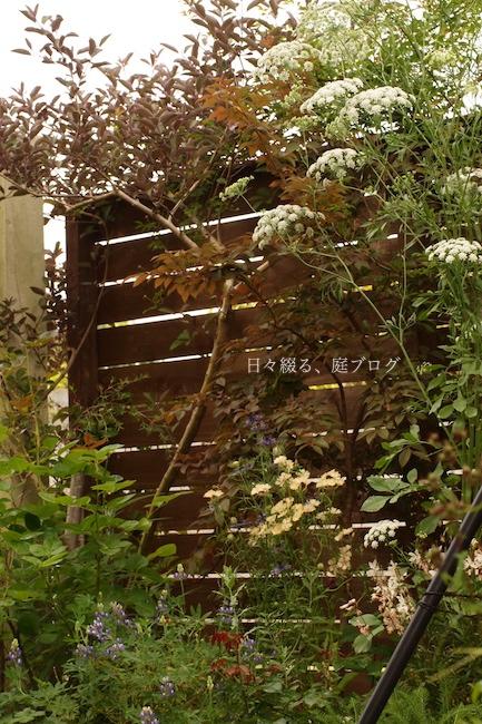 f:id:m-garden-life:20180530182227j:plain