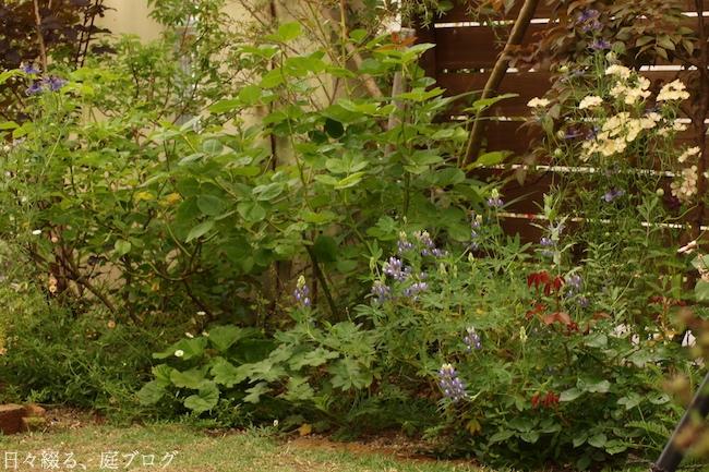 f:id:m-garden-life:20180530182656j:plain
