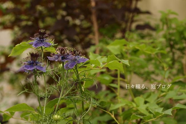 f:id:m-garden-life:20180530204955j:plain
