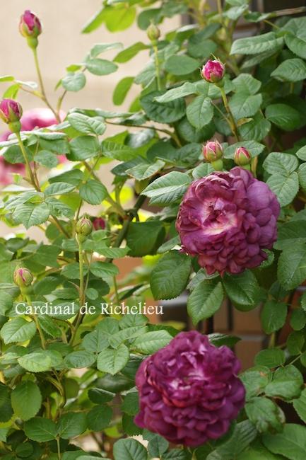f:id:m-garden-life:20180602193631j:plain