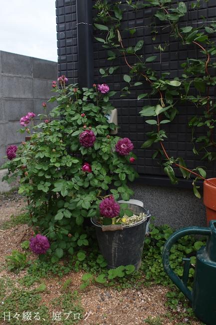 f:id:m-garden-life:20180602200553j:plain