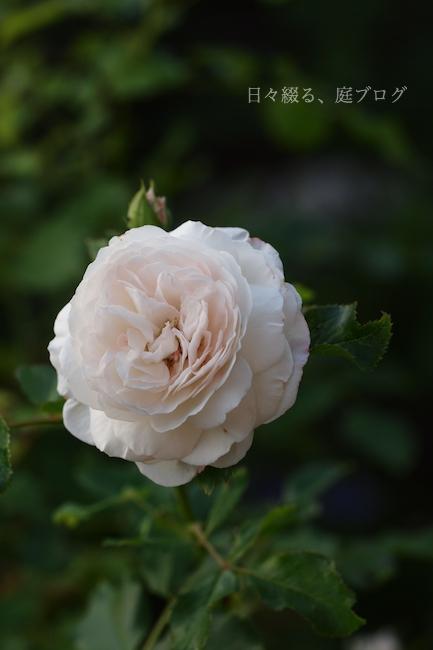 f:id:m-garden-life:20180603201025j:plain