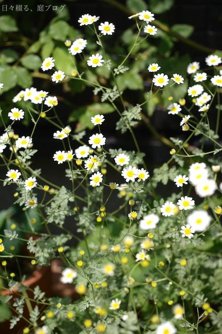 f:id:m-garden-life:20180603201126j:plain