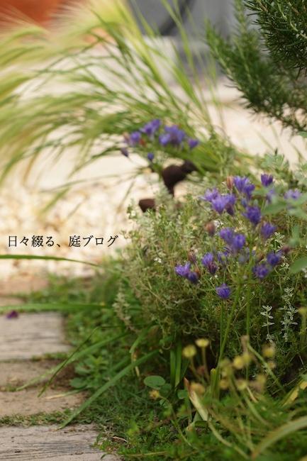 f:id:m-garden-life:20180603201416j:plain