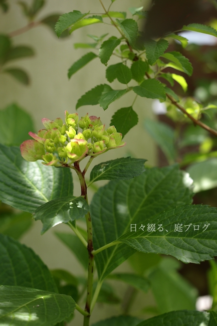 f:id:m-garden-life:20180603201454j:plain