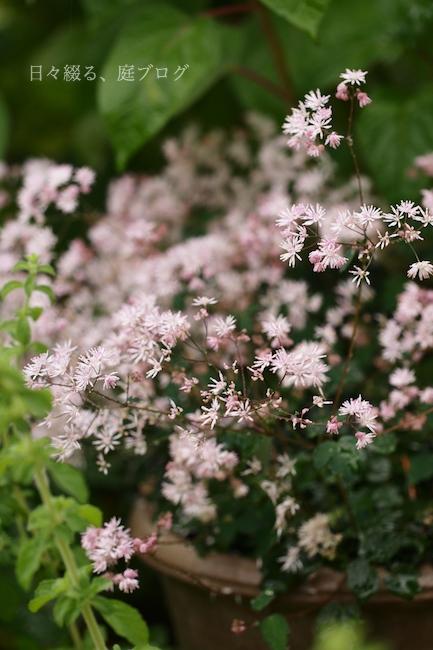 f:id:m-garden-life:20180605164150j:plain