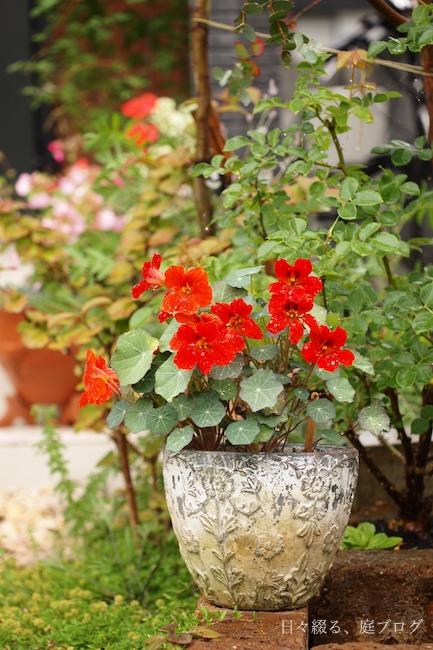 f:id:m-garden-life:20180605164414j:plain