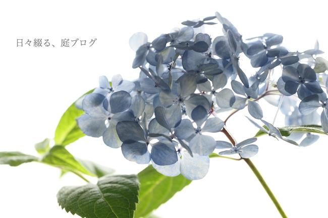 f:id:m-garden-life:20180608182205j:plain
