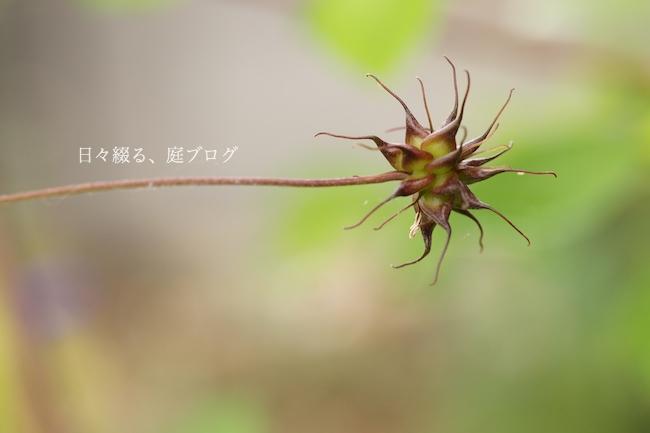 f:id:m-garden-life:20180608182832j:plain