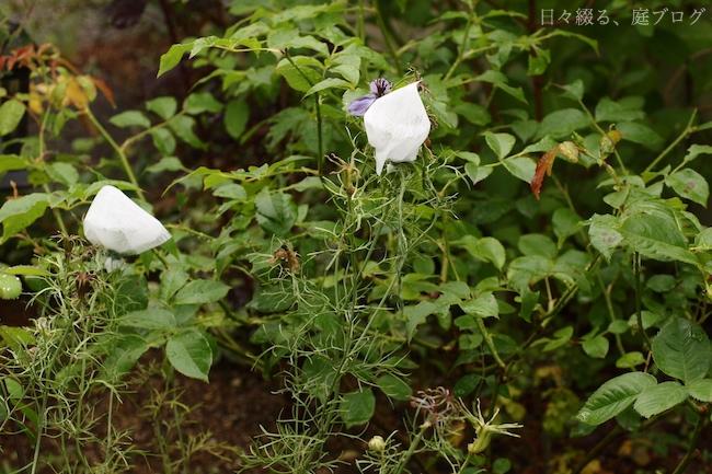f:id:m-garden-life:20180611093736j:plain
