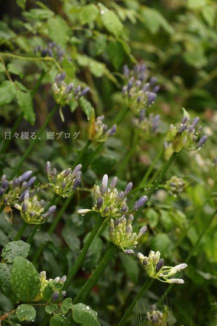 f:id:m-garden-life:20180611094039j:plain
