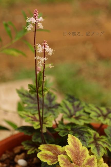 f:id:m-garden-life:20180611094114j:plain