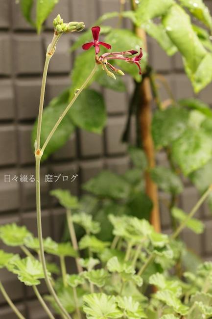 f:id:m-garden-life:20180611094949j:plain