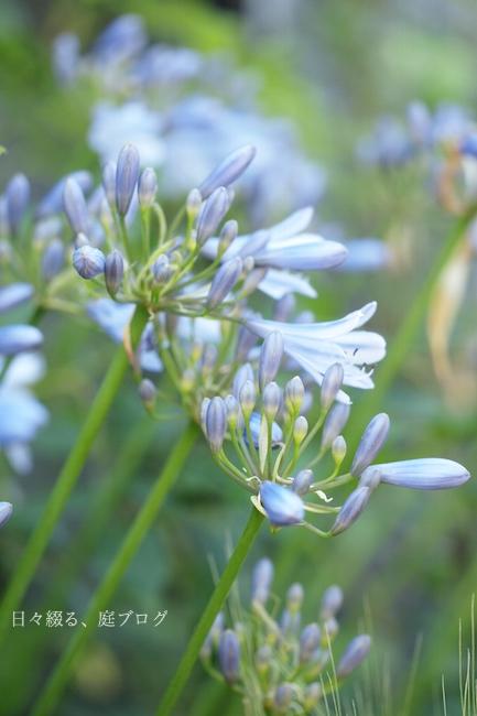f:id:m-garden-life:20180615160243j:plain