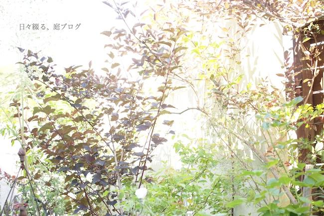 f:id:m-garden-life:20180615160354j:plain